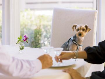 【4/28~5/6】【ランクアップルーム】愛犬と一緒に過ごすGW ディナーは奥田シェフプロデュースのイタリアンフルコース♪