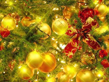【クリスマス限定★Special Dinner】愛犬と一緒に過ごす大人のクリスマス♪[1泊2食]