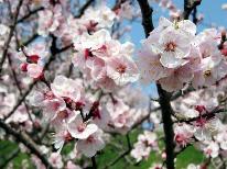 春を感じるあんずのお花見プラン♪ピンクのお花の彩り~☆あんず酒サービス特典付き☆