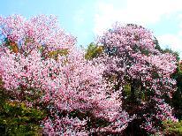 春爛漫♪郡上のお花見スポットへLet's Go~!  旦那の気まぐれおまかせプラン