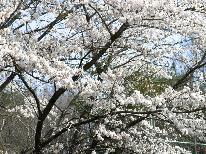 《長く楽しめる山梨の桜》 甲斐の桜×旬の食材でフルコース♪お花見プラン【1泊2食付】