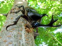 【お子様歓迎★添い寝無料】遊びも勉強だっ♪カブトムシふれあいの森で自然体験!【特典付】