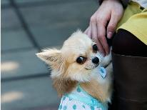 ワンちゃん無料♪大切な愛犬もいっしょに旅行を満喫♪≪予約前の電話確認必須≫【2室限定】