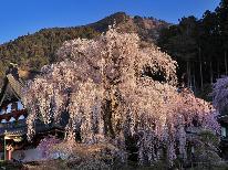 身延の桜を空と地から◆しだれ桜とロープウェイから見下ろすさくら◆四季会席と温泉を楽しむ1泊2食付プラン
