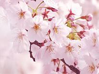 【第20回!みなみの桜と菜の花まつり】早春☆桜並木をドライブ♪新鮮舟盛りと温泉満喫!