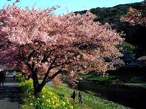 【河津桜・みなみの桜と菜の花まつり】☆高足ガニと地魚☆早春のお花見プラン