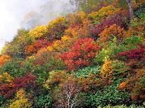 【HP限定】行楽シーズン!紅葉と子持ち鮎と天然きのこプラン【選べるお部屋食!】