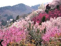 【福島に桃源郷あり】桜舞う、春のお花見スポットへ!9種から選べる福島の地酒付き[1泊2食]