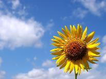◆7月限定◆夏休み早期割◆平日も土日も1泊2食付きが1万円ポッキリ!夏休みは蔵王へ温泉旅行♪