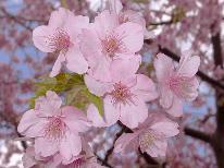 ★河津桜と梅★あったか伊豆の早春♪肌に優しいとろ~り源泉と五感で楽しむ和食膳。*゚