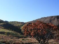 【トレッキング】秋の志賀高原を歩く!ガイド手配もお任せ♪【1泊2食付】☆6月1日~10月31日☆