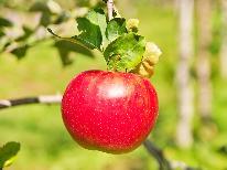 【リンゴ】やまのうち くだもの狩り体験♪<りんご狩り 30分間>季節&期間限定の味を召し上がれ~