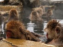 【スノーモンキー】地獄谷野猿公苑 往復バスチケット付き♪温泉に入るニホンザルを見に行こう~2泊限定プラン