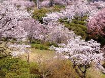 桜の名所!菊池温泉の『さくらまつり』と温泉を満喫!季節の会席プラン
