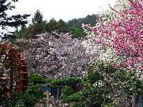 【期間限定◎春旅応援】見つけたらラッキー!4月は中旬は桜吹雪♪料理グレードアップ会席が1000円オフ更に特典付]