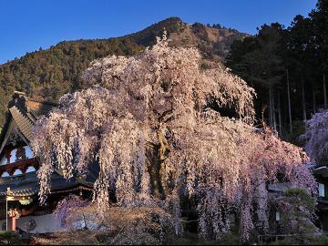 【期間限定3~4月】桜を満喫!《春の香りきらきらプチお祝いコース》