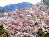 【3/30~4/21限定】絶景☆吉野の桜を満喫♪春のさくら会席プラン