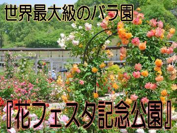 スポット+゜世界最大級のバラ園『花フェスタ記念公園』で四季の花を堪能♪特典付き〔素泊まり〕