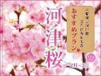 【河津桜まつり】早春のお花見へ出かけよう 【季の舞-toki-】