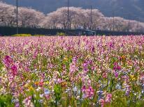 《雲見温泉桜プラン》西伊豆の約6㎞の桜並木◆乾杯ドリンクサービス付き