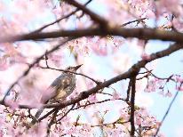 【1泊2食】桜咲く大子町を散策♪観光めぐり&桜めぐりで春の茨城旅を満喫しよう!