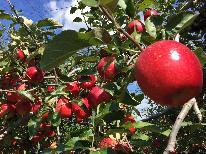 ◆自家農園◆神鍋亭の真っ赤なりんごをお土産に♪♪≪期間限定≫すき焼き×りんご狩り体験プラン