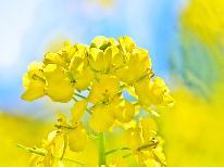 【春の味覚】地物山菜、とうたち菜 野沢温泉唯一の菜食料理宿 春会席プラン【2食付】