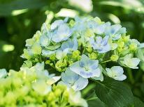 【夏までの期間限定☆直前割】直前予約で10%OFF♪新緑・ホタル・高山植物を楽しもう【1泊2食】