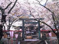 金崎宮で花換まつり★日本海が見える千本桜を見に敦賀へ~♪スタンダード新鮮魚貝をリーズナブルに!