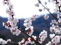 【期間限定】春爛漫! 船から見る『神子の山桜』 豪快舟盛×船上花見