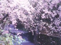 春爛漫!桜舞い踊る♪ 神子の山桜を見に行こう!☆朝獲れ地魚☆新鮮海鮮プラン★+゜