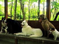 ≪どうぶつ王国≫愛犬と一緒に行ける!那須の人気スポットどうぶつ王国の入場券付き◇1泊2食