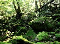 【島の探検隊】白谷雲水峡(もののけの森)ガイド付きプラン<1泊2食>※ガイド料金別途必要