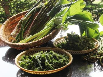 1泊2食付『山菜&根曲がり竹』信州の春を食す♪【この季節だけの春の味】
