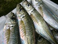 【HP限定価格】【安心価格】旬の獲れたて海鮮を味わう♪