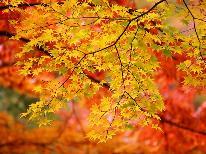 【11月限定】紅葉を見に行こう!!彩り鮮やかな紅葉観賞☆