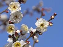 熱海梅園★梅まつりプラン【春を先取り!】≪1泊2食付≫