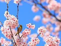 【お花見】期間限定☆彡ドリンクサービス!春の行楽シーズンに♪