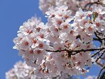 【貸切温泉】お花見スポット盛りだくさん!舞い散る桜とビールで乾杯♪≪ジューシーな雫石牛を堪能≫