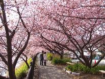 【3/25~4/2限定】伊豆高原桜まつりプラン★春を満喫した後は★海の幸と天然温泉かけ流し