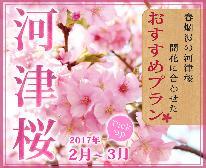 【2/10~3/10限定】春の伊豆満喫プラン★河津桜×グルメ×温泉★海の幸と天然温泉かけ流し