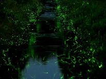 【夏の風物詩】ホタルの優しい光に癒されよう☆天然蛍鑑賞プラン