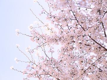 【春爛漫♪平日限定】特典付お花見プラン!花見露天でゆったりと・・・[貸切温泉6種&手作りフレンチ]