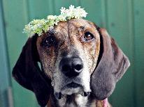 【プロットハウンド限定!】看板犬ロビンと同じ犬種の君を待っています☆【特典付】