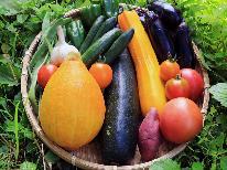 【季節の野菜のせいろ蒸し】自家製野菜を一番おいしい食べ方で!◆手作りの3種類のタレで舌鼓♪