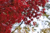 【秋限定】1日2組限定★紅葉の女子旅応援!お部屋グレードUP★季節のスイーツ特典付
