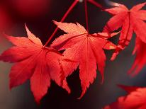 【紅葉・御岳山】ケーブルカーで山頂近くへ!秋のパノラマを満喫!♪紅葉プラン【特典付】