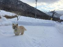 【冬・雪】ワンちゃんと雪遊び & ワンワン温泉で温かい♪わんちゃん大喜びアイテム!思いっきりペットと遊べて楽しい プラン