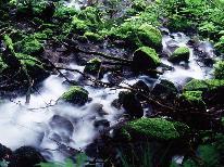 ◆チャツボミゴケ公園◆関東ではここだけ!珍しい苔が織り成す絶景を見に行こう♪レザンから車で25分。