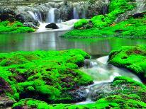 ☆◆チャツボミゴケ公園◆関東ではここだけ!珍しい苔が織り成す絶景を見に行こう♪レザンから車で25分。